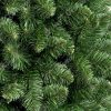 Detailní fotka přirozeně zelených větviček borovice na pařezy.