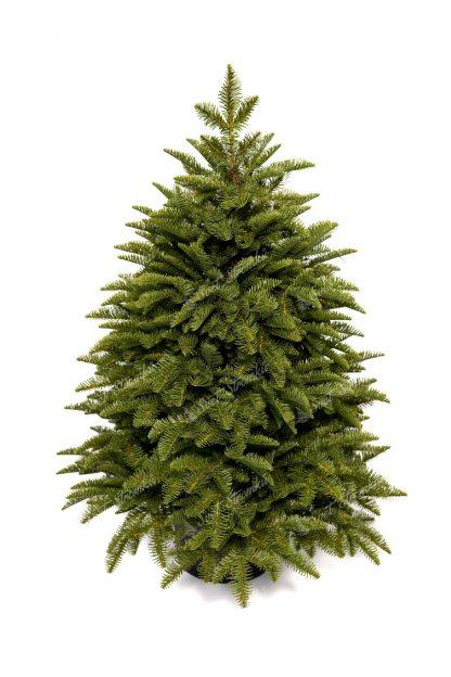 Hustý malý vánoční stromek v květináči. Stromek je světlezelené barvy.