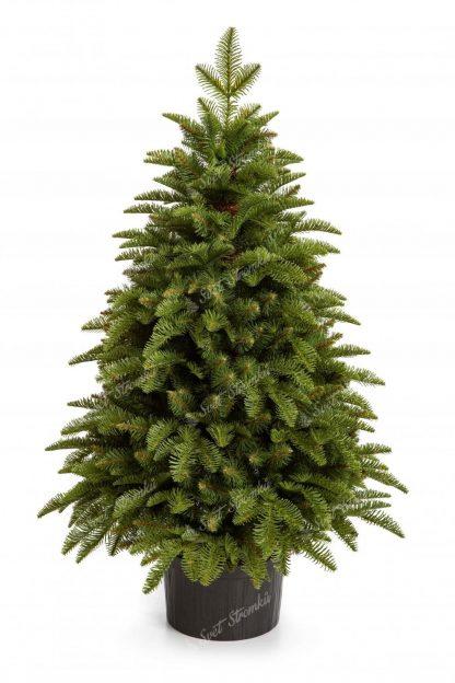 Hustý malý vánoční stromek světlezelené barvy v květináči.
