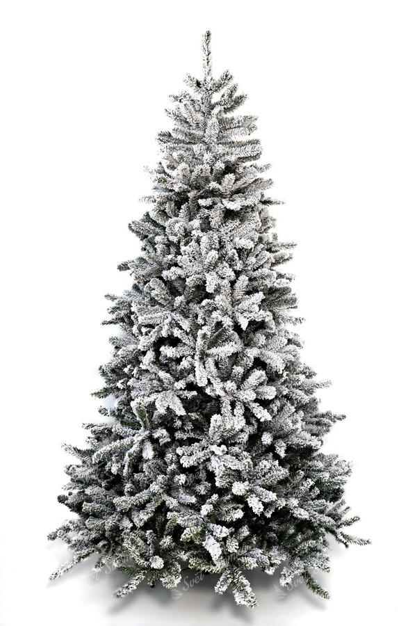 Bílý vánoční stromeček Smrk severský
