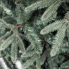 Vánoční stromek 3D Jedle Stříbřitá detail jehličí