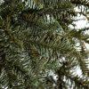 Vánoční stromek FULL 3D Jedle Normandská detail jehličí