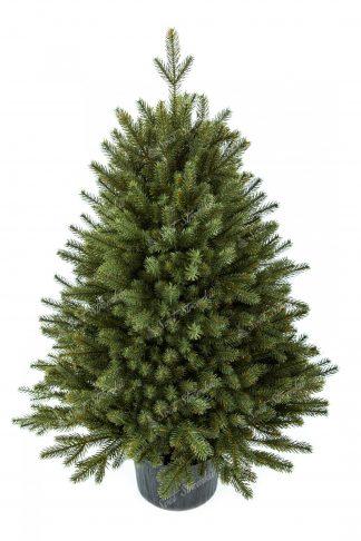 Vánoční stromek FULL 3D Smrk Alpský v květináči